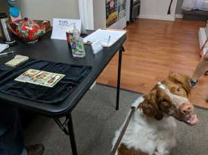 Dog having tarot card reading